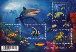 2012-04-23-bloc-poissons-tropicaux.jpg